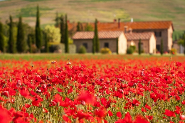 tuscany001.jpg