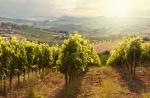 tuscany003.jpg