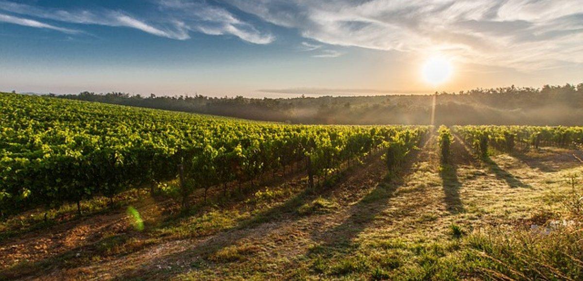 De beste wijnstreken van Italië