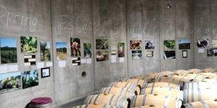Bezoek de wijnhuizen in Bolgheri, Toscane